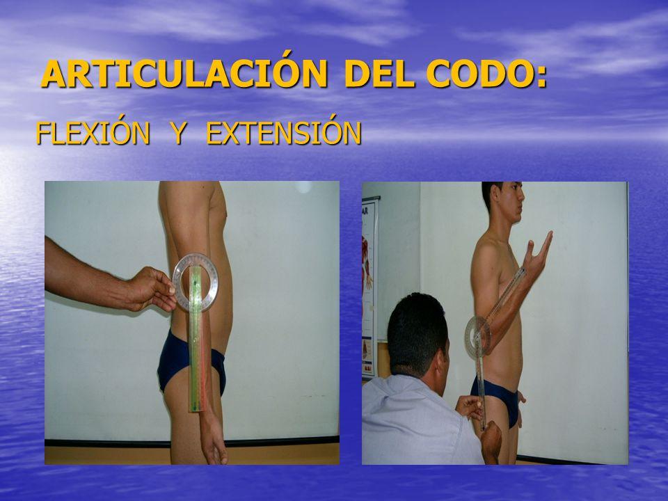 ARTICULACIÓN DEL CODO: