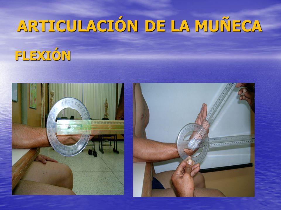 ARTICULACIÓN DE LA MUÑECA