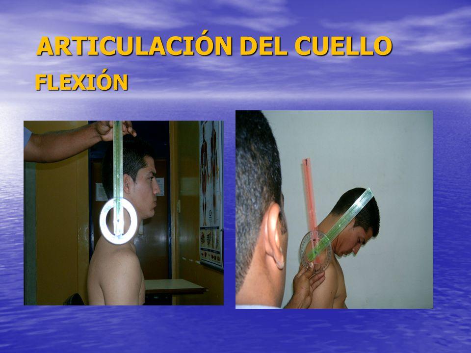 ARTICULACIÓN DEL CUELLO