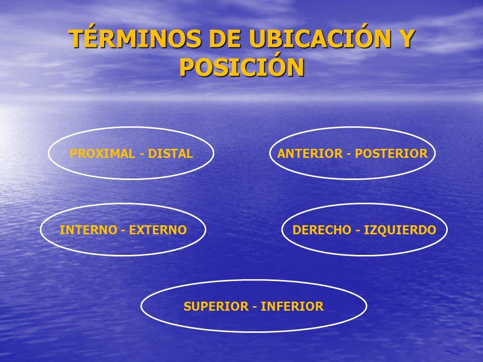 TÉRMINOS DE UBICACIÓN Y POSICIÓN
