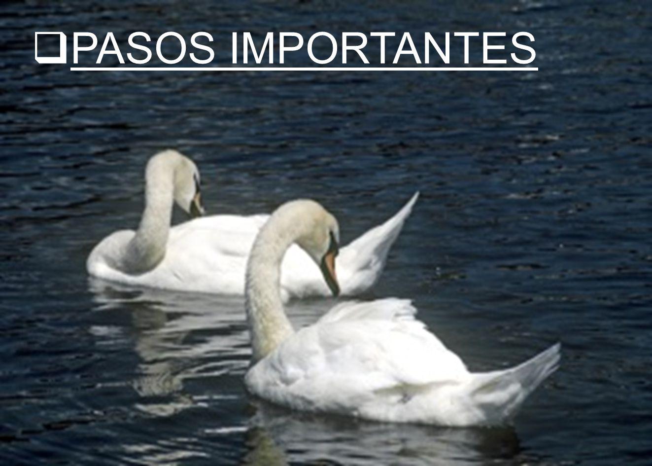 PASOS IMPORTANTES