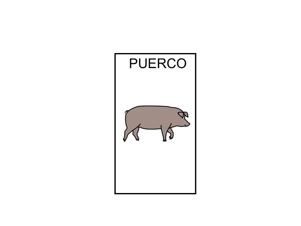 PUERCO