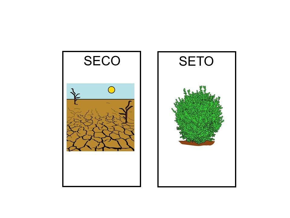 SECO SETO