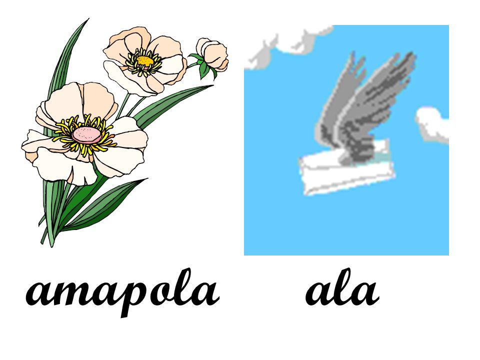amapola ala