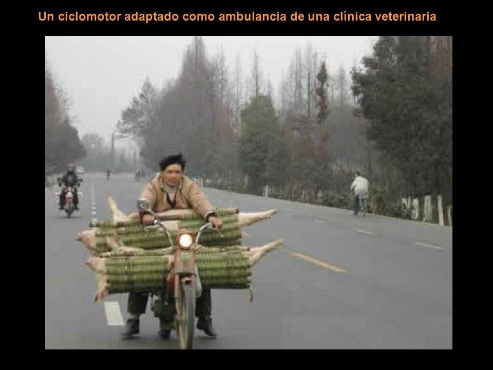 Un ciclomotor adaptado como ambulancia de una clínica veterinaria