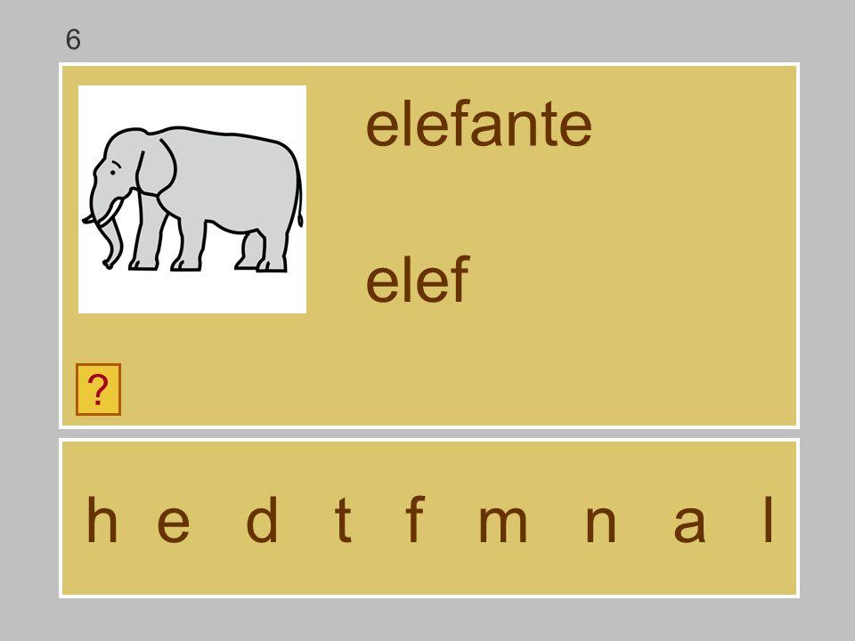 6 elefante elef h e d t f m n a l