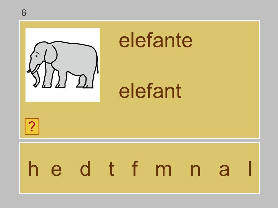 6 elefante elefant h e d t f m n a l
