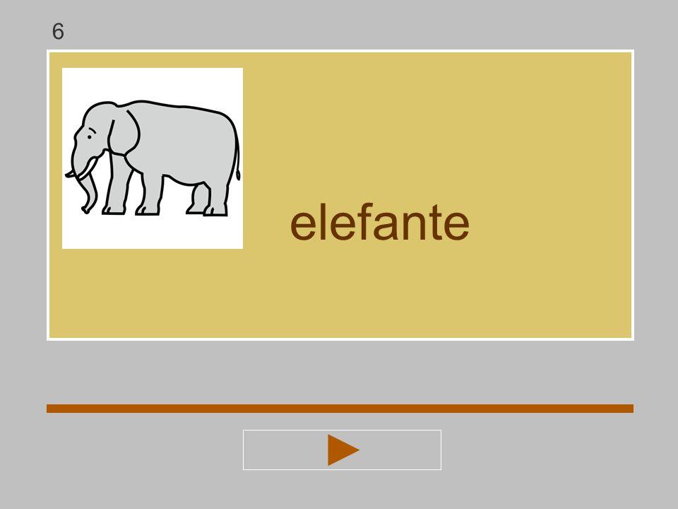 6 elefante
