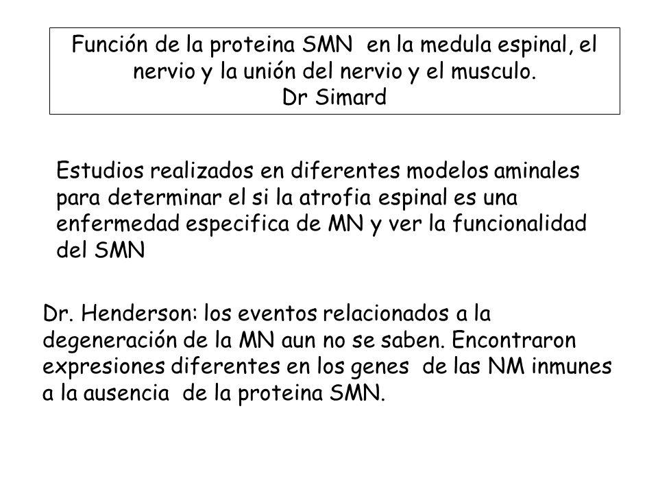 Función de la proteina SMN en la medula espinal, el nervio y la unión del nervio y el musculo. Dr Simard