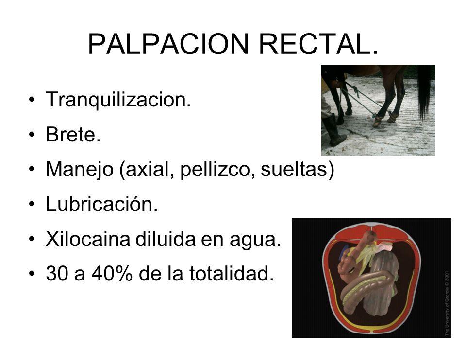 PALPACION RECTAL. Tranquilizacion. Brete.