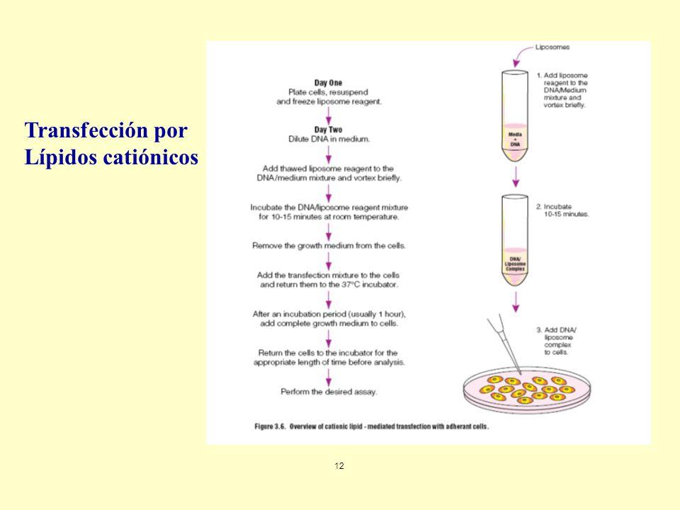Transfección por Lípidos catiónicos