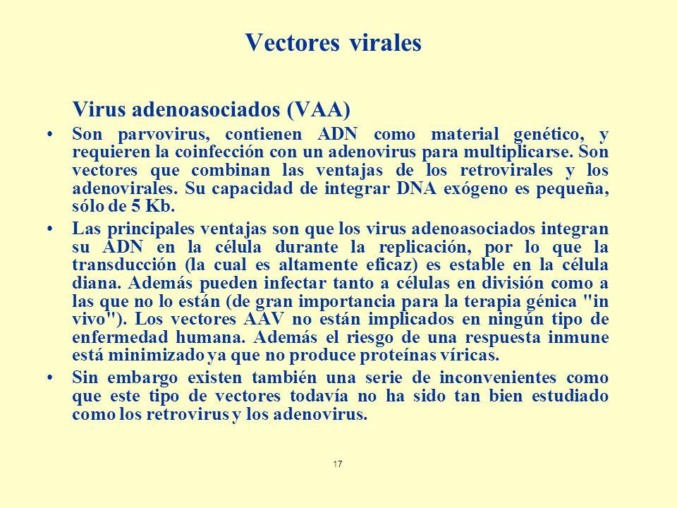 Vectores virales Virus adenoasociados (VAA)