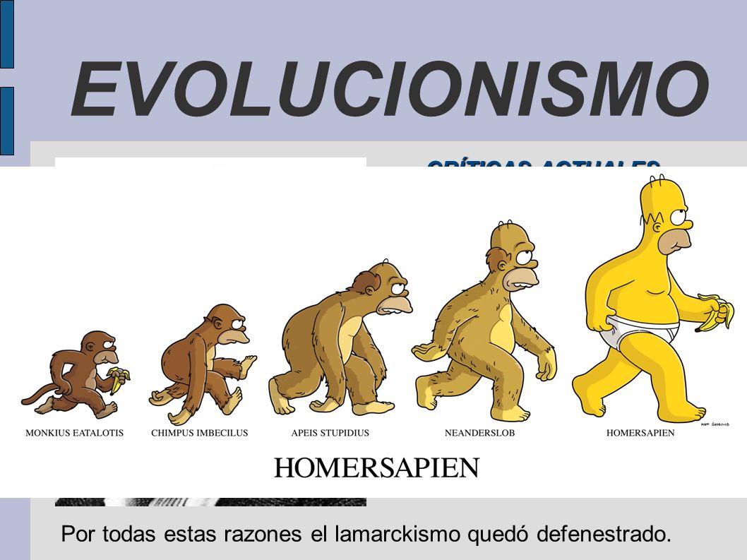 Por todas estas razones el lamarckismo quedó defenestrado.
