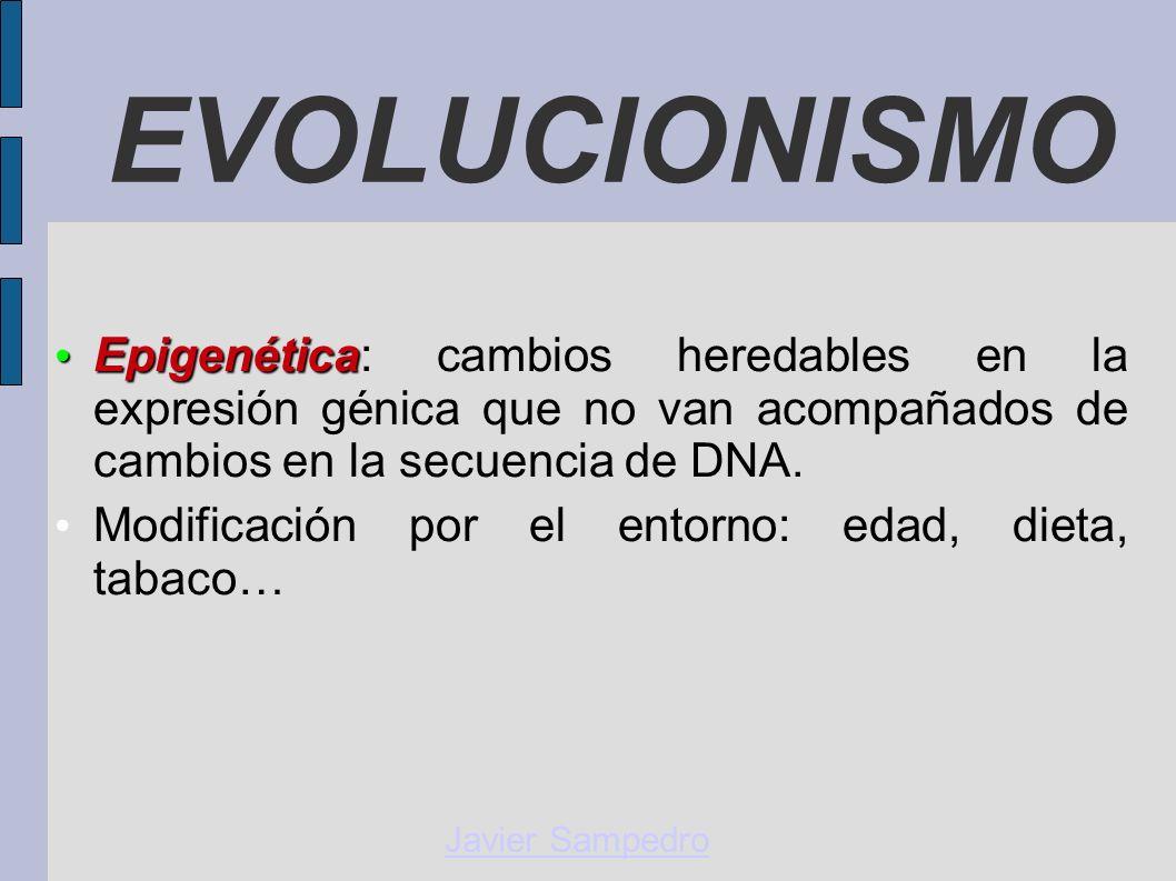 EVOLUCIONISMO Epigenética: cambios heredables en la expresión génica que no van acompañados de cambios en la secuencia de DNA.