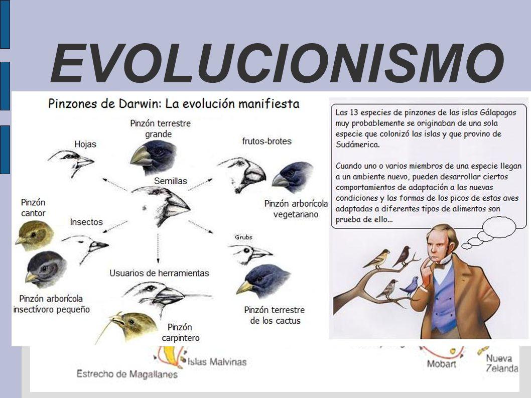 EVOLUCIONISMO ANTECEDENTES Argumento teológico del diseño