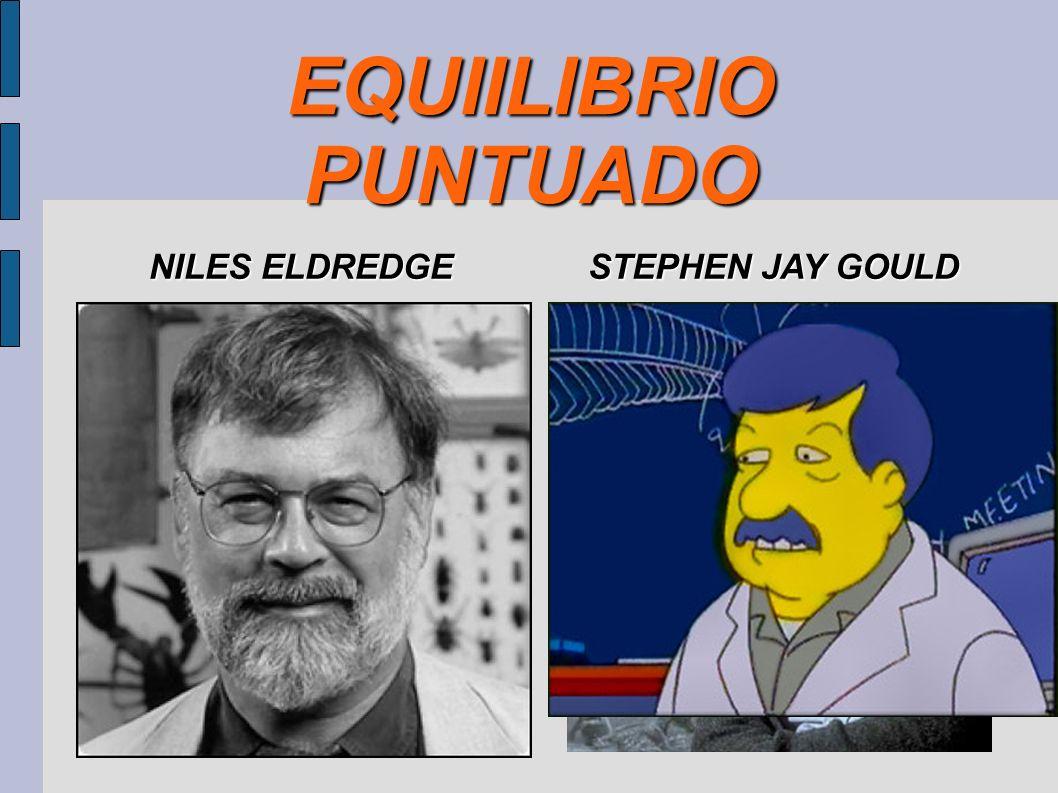 EQUIILIBRIO PUNTUADO NILES ELDREDGE STEPHEN JAY GOULD