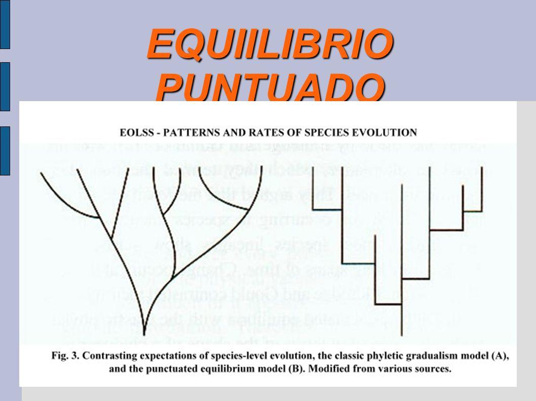 EQUIILIBRIO PUNTUADO