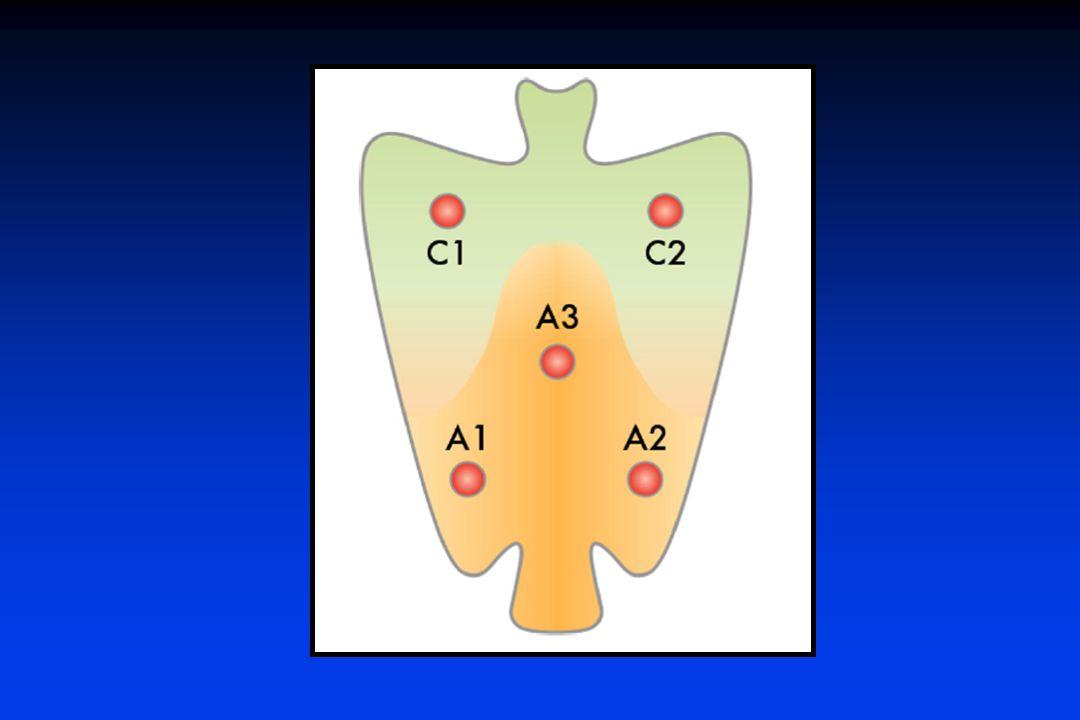 2 antro distal curvatura menor y mayor – angulo – cara anterior y posterior cuerpo proximal