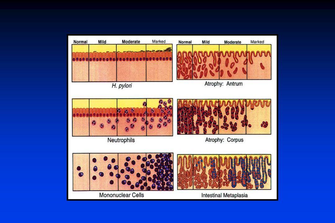 Escala visual. Sidney no sobre el formato recomendado de informe de biopsias.