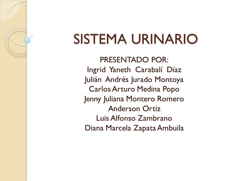 SISTEMA URINARIO PRESENTADO POR: Ingrid Yaneth Carabalí Díaz