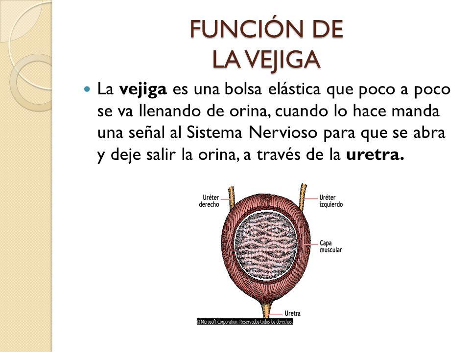 FUNCIÓN DE LA VEJIGA