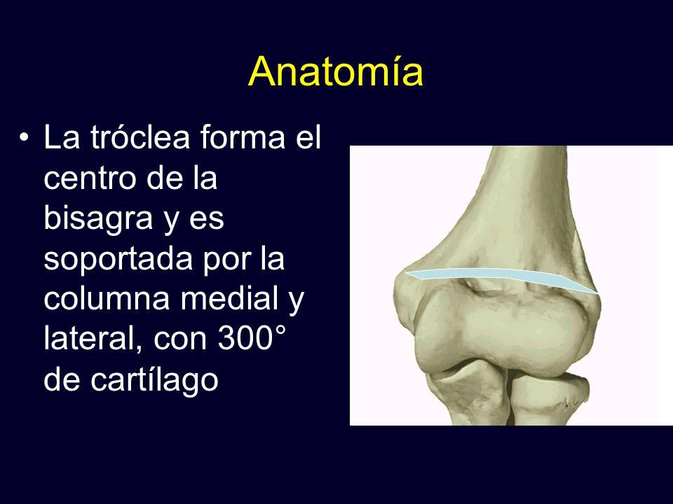 Anatomía La tróclea forma el centro de la bisagra y es soportada por la columna medial y lateral, con 300° de cartílago.