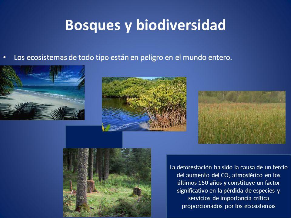 Bosques y biodiversidad