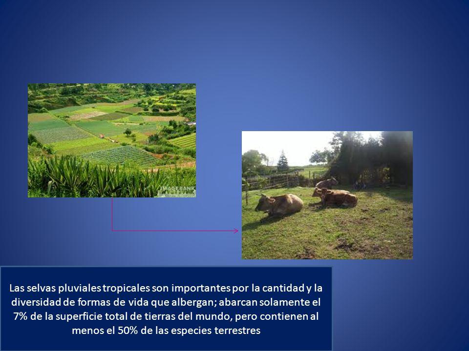 Las selvas pluviales tropicales son importantes por la cantidad y la diversidad de formas de vida que albergan; abarcan solamente el 7% de la superficie total de tierras del mundo, pero contienen al menos el 50% de las especies terrestres