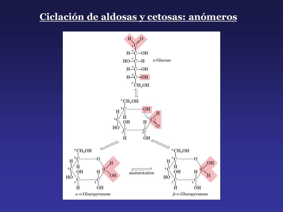 Ciclación de aldosas y cetosas: anómeros
