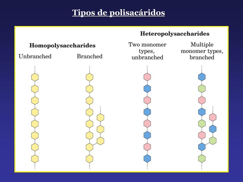 Tipos de polisacáridos