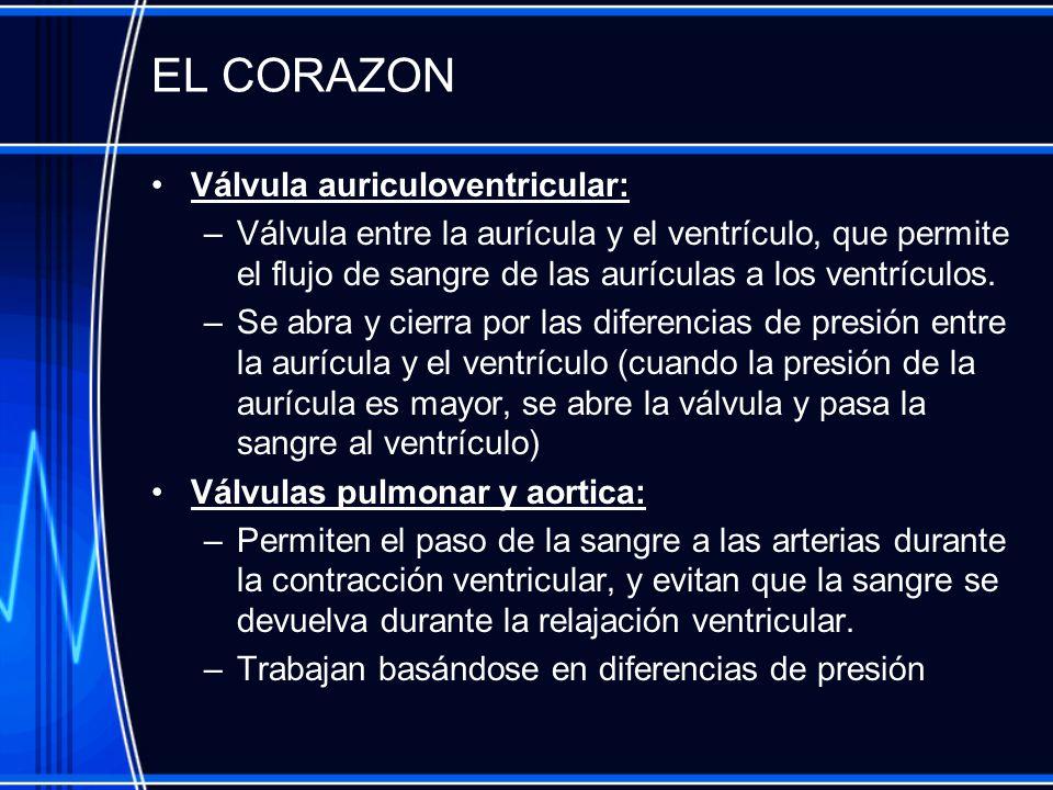 EL CORAZON Válvula auriculoventricular: