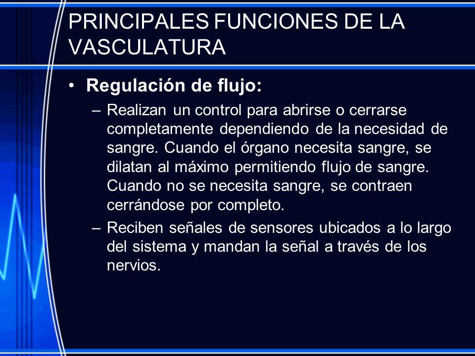 PRINCIPALES FUNCIONES DE LA VASCULATURA