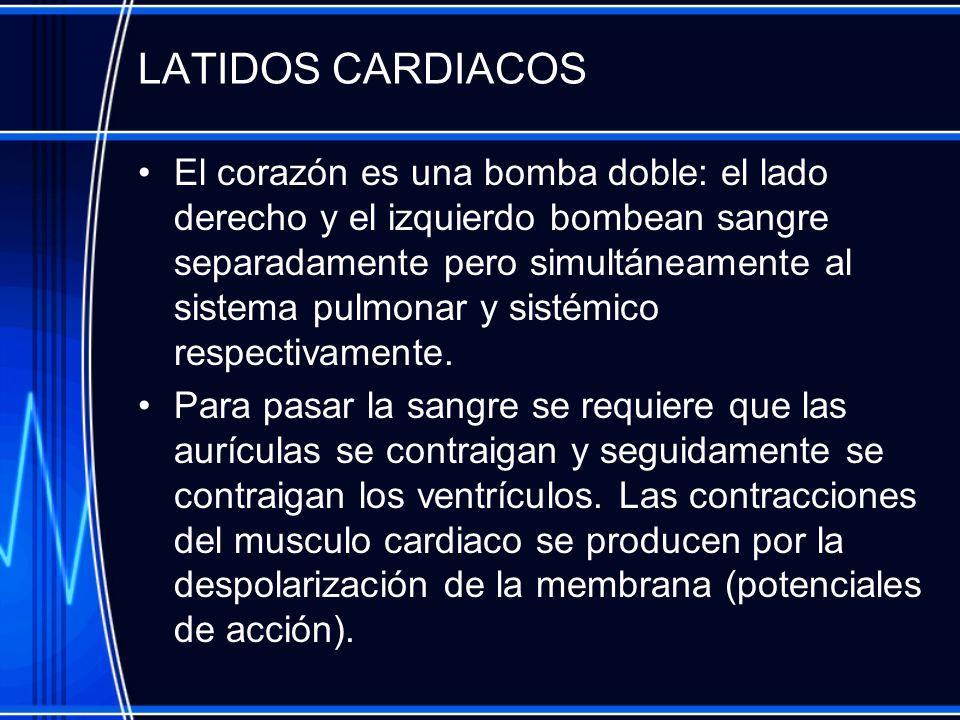 LATIDOS CARDIACOS