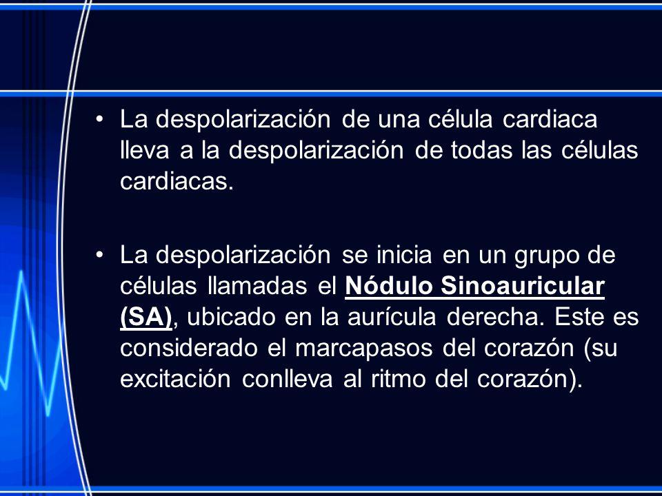 La despolarización de una célula cardiaca lleva a la despolarización de todas las células cardiacas.