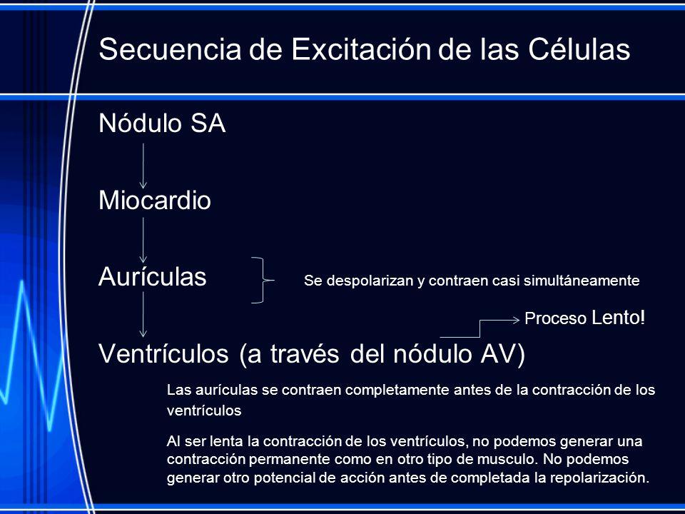 Secuencia de Excitación de las Células