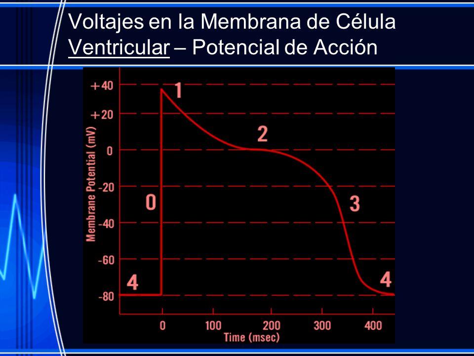 Voltajes en la Membrana de Célula Ventricular – Potencial de Acción