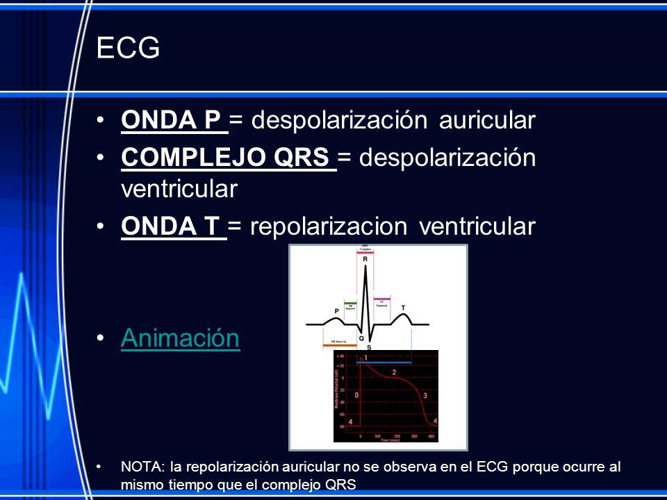 ECG ONDA P = despolarización auricular