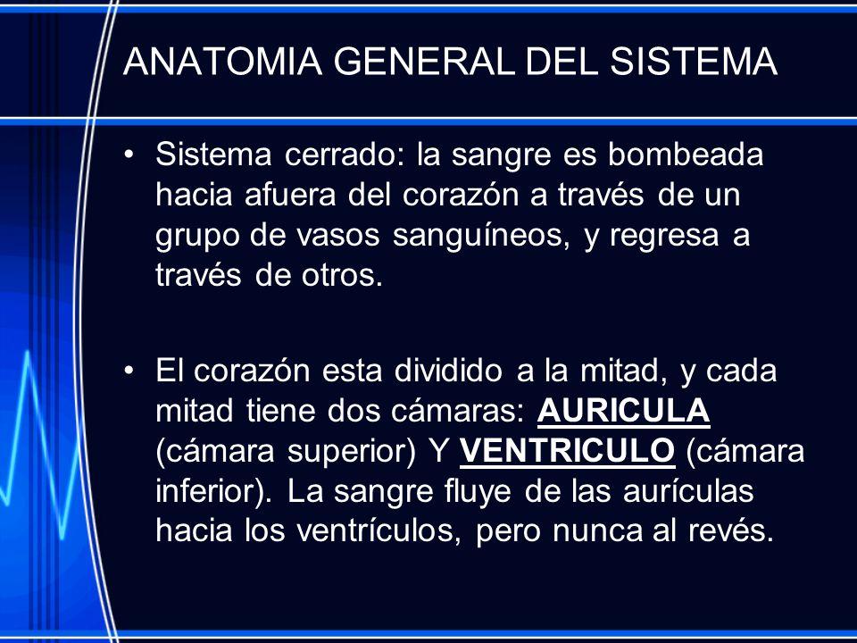 ANATOMIA GENERAL DEL SISTEMA