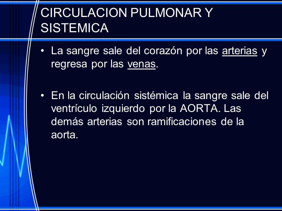 CIRCULACION PULMONAR Y SISTEMICA
