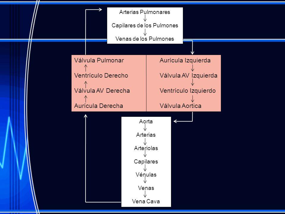 Capilares de los Pulmones