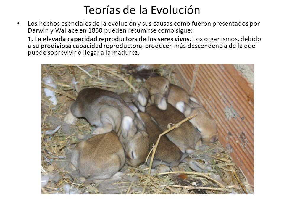 Teorías de la Evolución