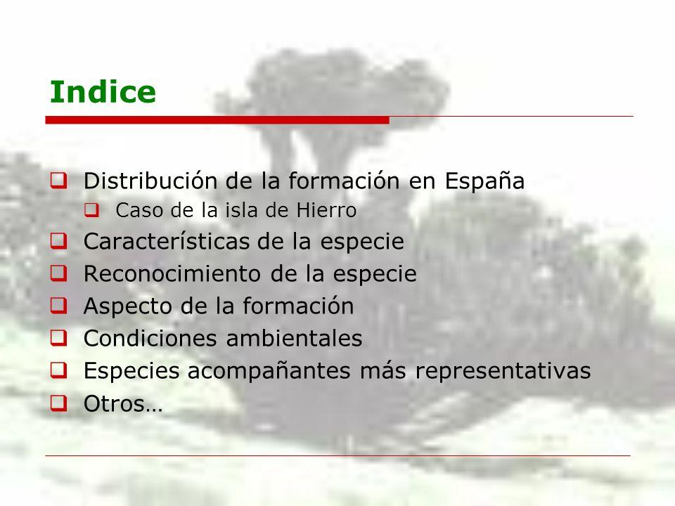 Indice Distribución de la formación en España