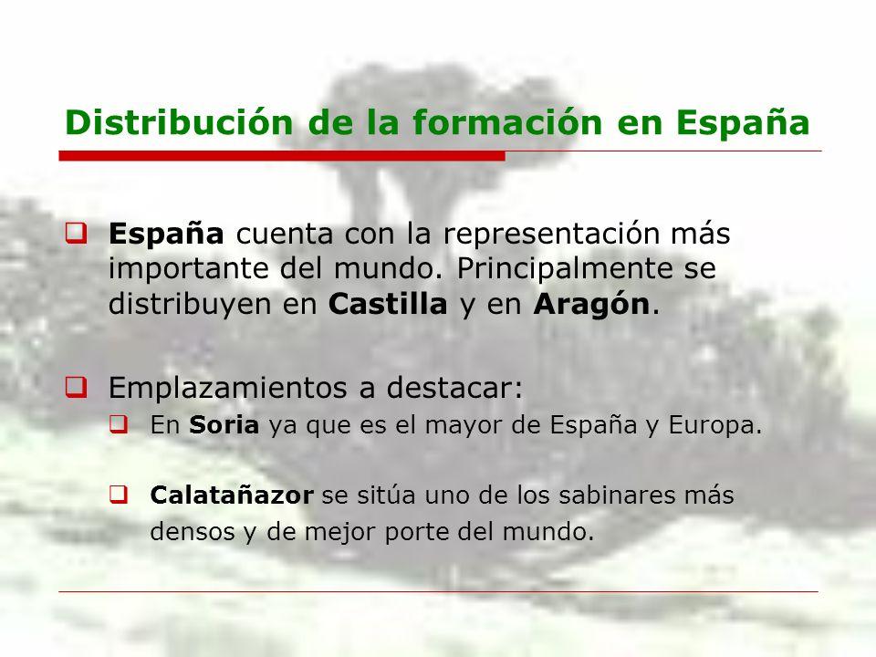 Distribución de la formación en España