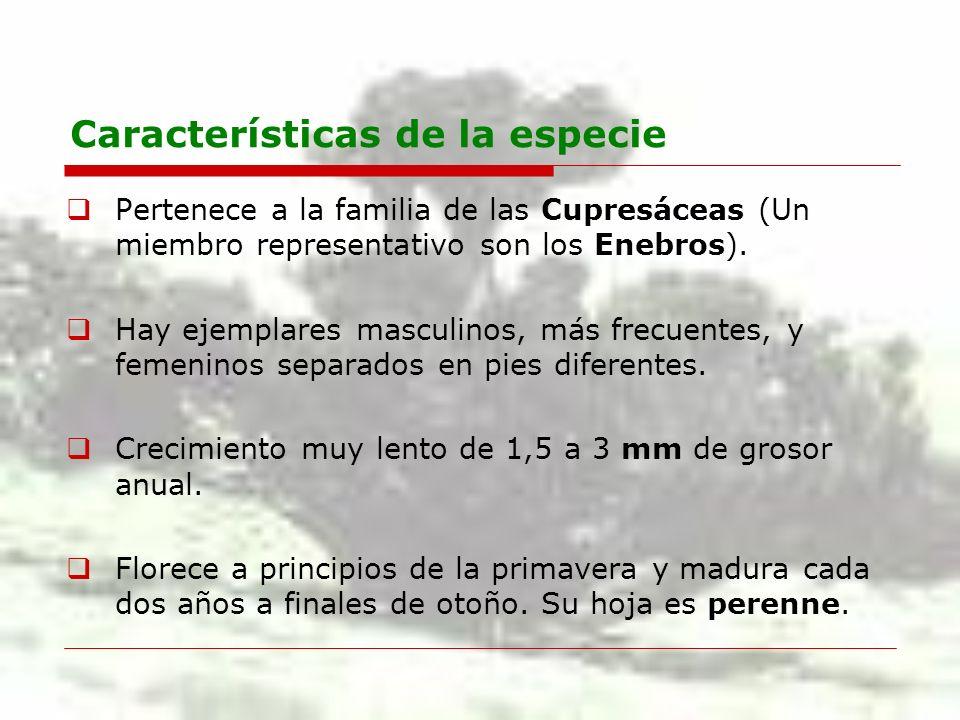 Características de la especie