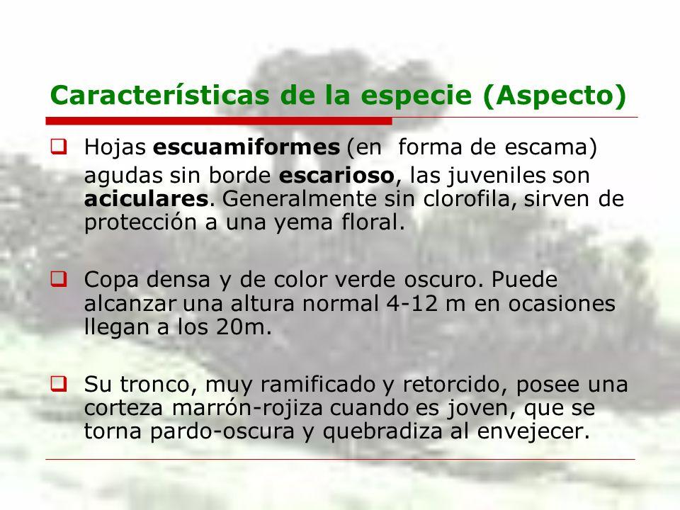 Características de la especie (Aspecto)