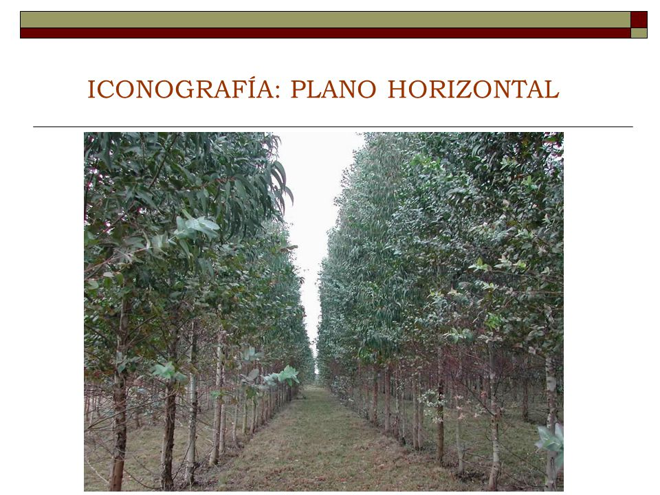 ICONOGRAFÍA: PLANO HORIZONTAL