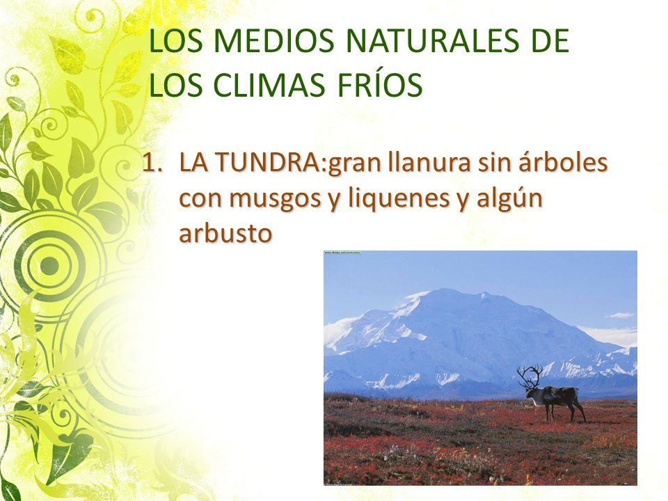 LOS MEDIOS NATURALES DE LOS CLIMAS FRÍOS