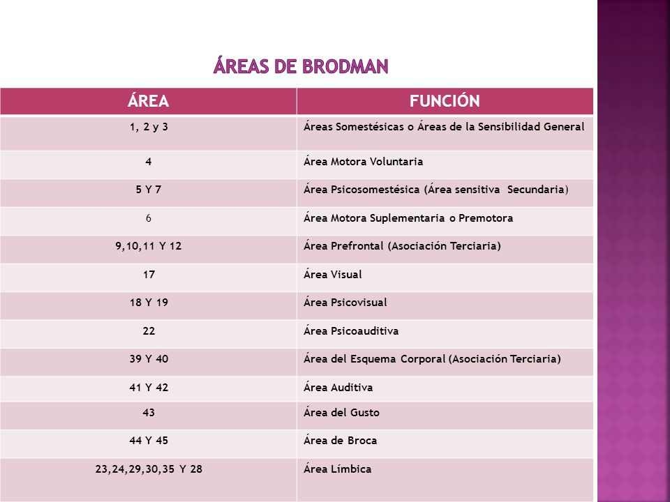 ÁREAS DE BRODMAN ÁREA FUNCIÓN 1, 2 y 3
