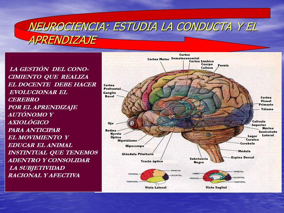 NEUROCIENCIA: ESTUDIA LA CONDUCTA Y EL APRENDIZAJE