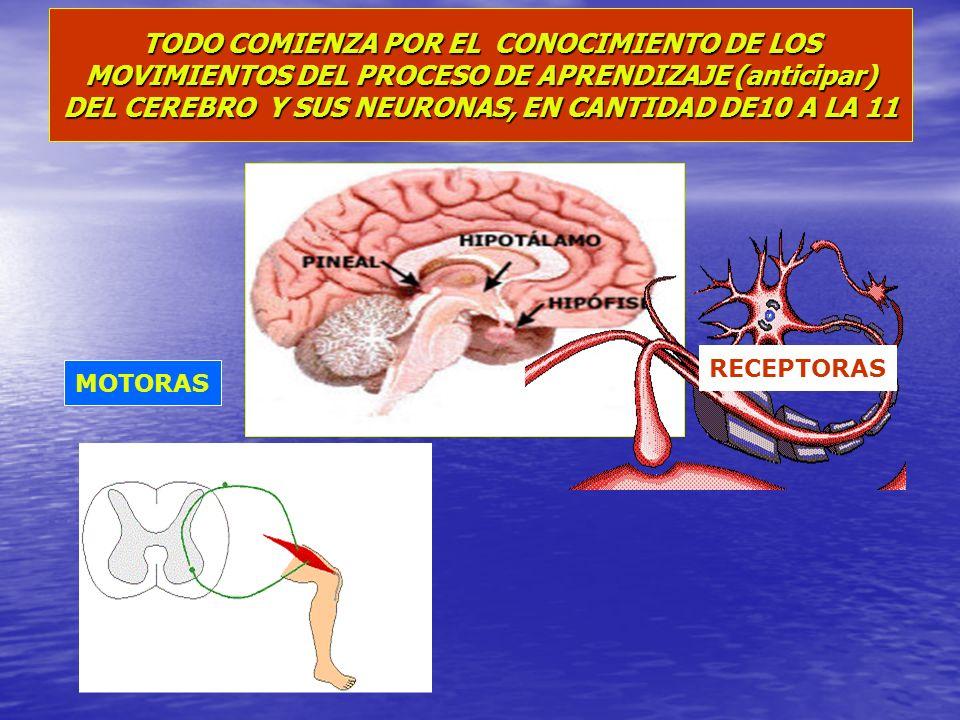 TODO COMIENZA POR EL CONOCIMIENTO DE LOS MOVIMIENTOS DEL PROCESO DE APRENDIZAJE (anticipar) DEL CEREBRO Y SUS NEURONAS, EN CANTIDAD DE10 A LA 11